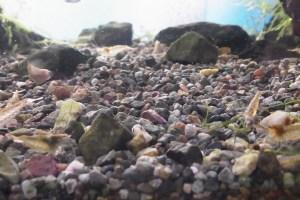 大磯砂の活用法:底面フィルター・水草水槽との相性や酸処理法のまとめ