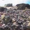 大磯砂の活用:底面フィルター・水草水槽との相性や酸処理