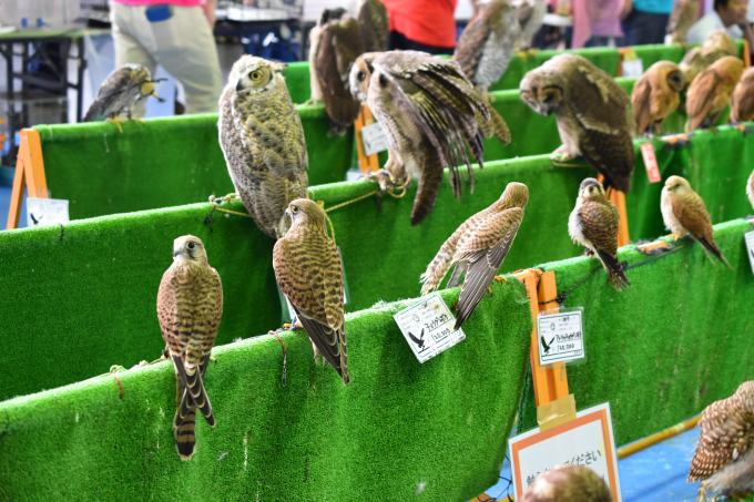 ナゴレプ会場にいた猛禽類