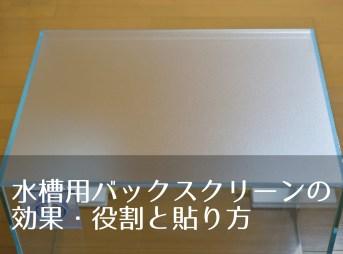 水槽用バックスクリーンの効果・役割と貼り方
