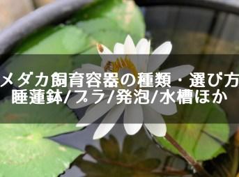 メダカ飼育容器の種類・選び方 睡蓮鉢/プラ/発泡/水槽ほか