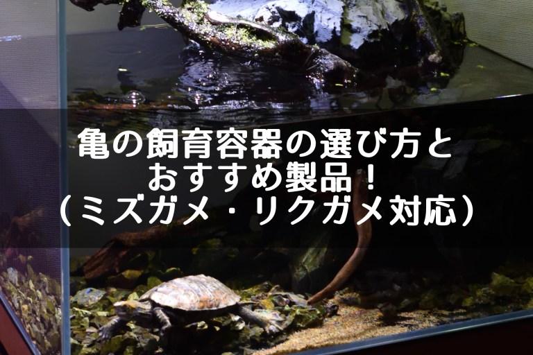 亀の飼育容器の選び方とおすすめ製品!(ミズガメ・リクガメ対応)