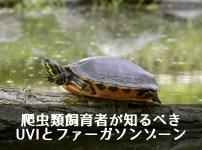 爬虫類飼育者が知るべきUVIとファーガソンゾーン