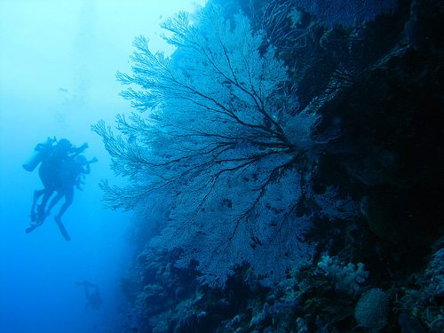 The Best Dive Sites Of The World Blue Corner Wall Palau Best Dive Sites: Top 15 Dives to Experience Before You Die