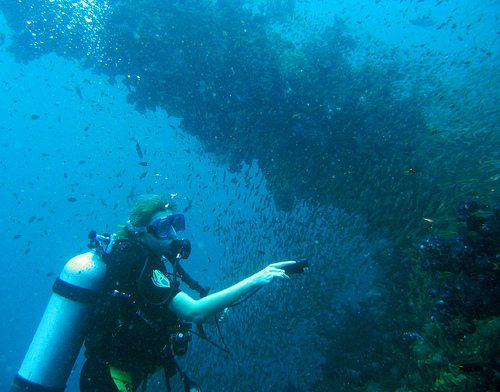 The Best Dive Sites Of The World SS Yongala Best Dive Sites: Top 15 Dives to Experience Before You Die
