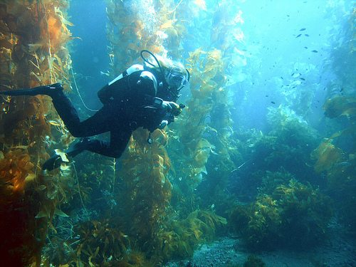 The Best Dive Sites of the World San Clemente Channel Islands California Best Dive Sites: Top 15 Dives to Experience Before You Die 2