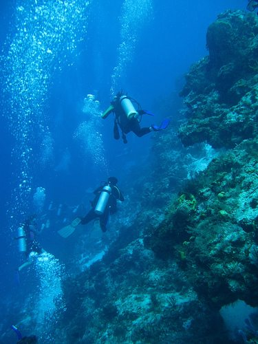 The Best Dive Sites of the World Santa Rosa Wall Cozumel Mexico Best Dive Sites: Top 15 Dives to Experience Before You Die 2