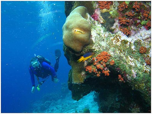 The best dives of the World Bonaire Netherlands Antilles Best Dive Sites: Top 15 Dives to Experience Before You Die 3