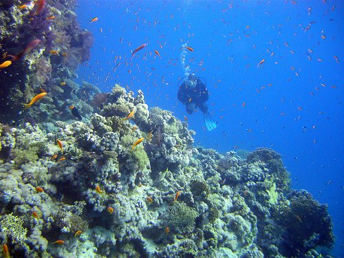 The best dives of the World Sharm El Sheik and Ras Mohammed Egypt Best Dive Sites: Top 15 Dives to Experience Before You Die 3