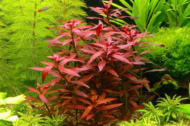 Easy Aquatic Plants