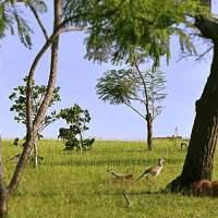É preciso ser tropófila para sobreviver ao bioma do Cerrado