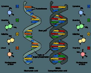 Científicos rusos demuestran que el ADN puede ser reprogramado por palabras y frecuencias determinadas