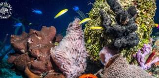 Barreras de coral México
