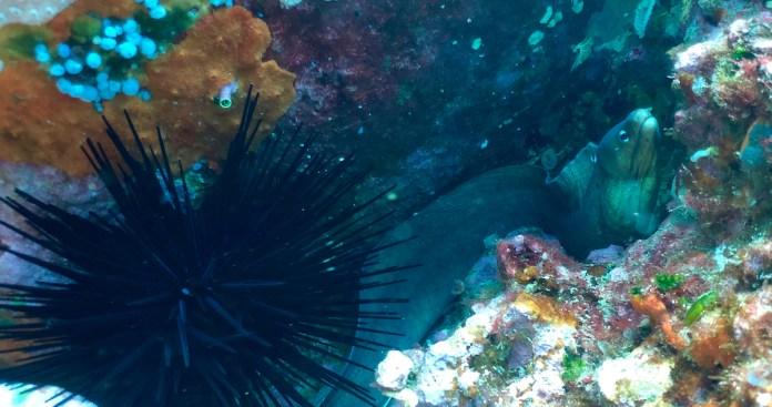 Las paredes de coral y el lugar descrito por Cousteau son espectaculares