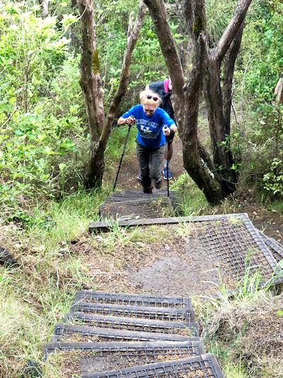 Subida a Whangarei Heads. Isla Norte de Nueva Zelanda