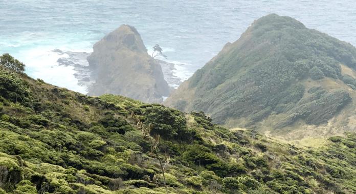 Kahira, un árbol con más de 800 años, sagrado para los maoríes. Descubrir Nueva Zelanda
