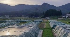 Fukushima 2011 2021 Greenpeace