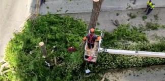 Acacias por aparcamiento en Aluche
