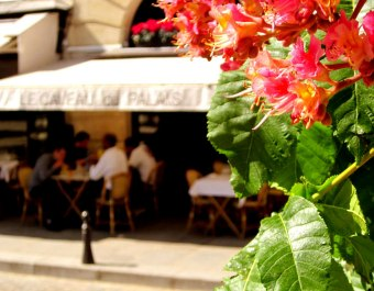 IMG_2468-paris-there-are-flowers