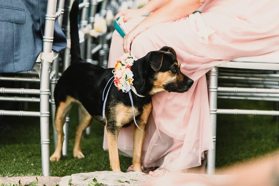 mascota portando anillo boda
