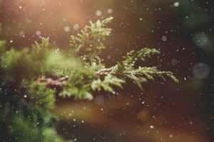 Las ventajas de las bodas de invierno