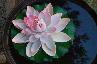 Espaço Tibet Lotus
