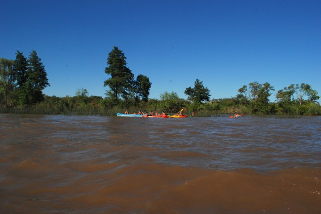delta do tigre remo Foto Gisele Teixeira
