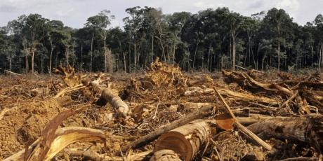 Halte à la déforestation