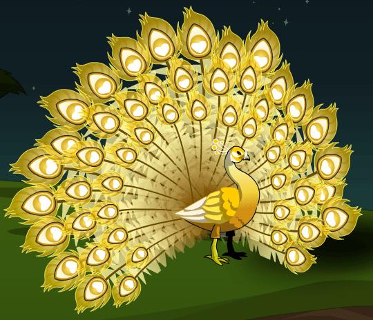 Golden Peacock  AQW