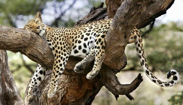 صور الحيوانات والطيور أثناء النوم 4