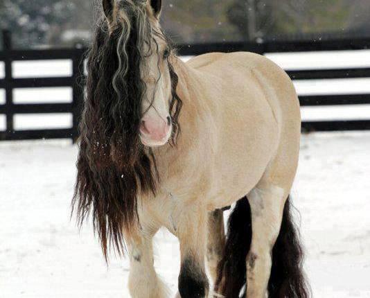 خيول كلايدزديل