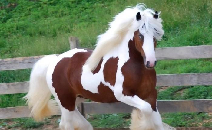 أجمل سلالات الخيول