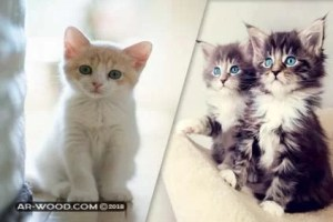 اكل القطط الصغيرة عمرها شهر