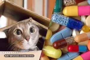 علاج الديدان عند القطط من الصيدليه البشريه