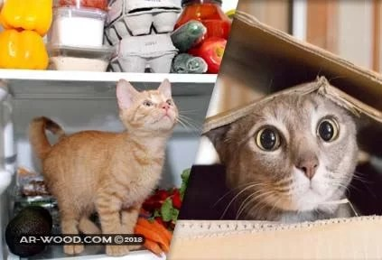 كم يوم تستطيع القطط العيش بدون طعام وماء