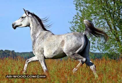 اسعار الخيول البلدى فى مصر
