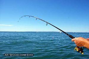 اوقات صيد السمك في البحر الابيض المتوسط