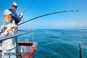 مواسم صيد السمك في البحر المتوسط