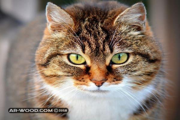 رؤية القطط في المنام للعزباء