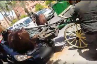 فيديو صادم.. حصان يهشم واجهة سيارة بمراكش