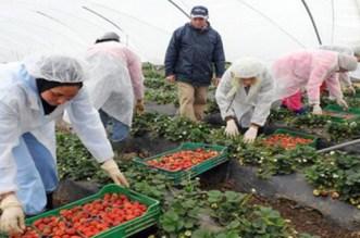 """""""حريك"""" الآلاف من العاملات في حقول الفراولة الإسباينة"""