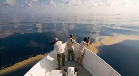 السيناتور الأسترالي في إندونيسيا لمناقشة تسرب النفط في بحر تيمور