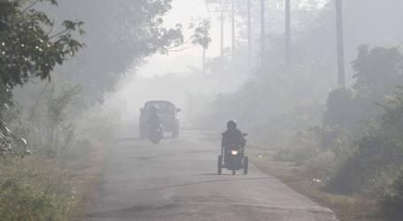 اجتاحت حرائق الغابات 30477 ألف هكتار في منطقة يوليو