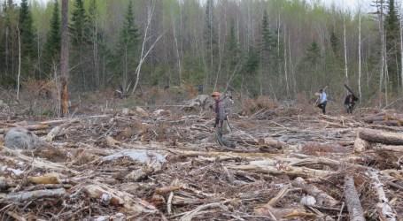 الوزارة : تحرير 6901 هكتارًا من منطقة الغابات المحمية في غرب كاليمانتان