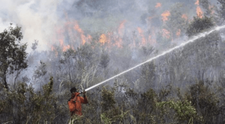 الرئيس الإندونيسي : لا حل وسط في التعامل مع مثيري حرائق الغابات