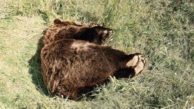 صورة غضب واسع بسبب قتل الحيوانات المهددة بالانقراض في اليونان