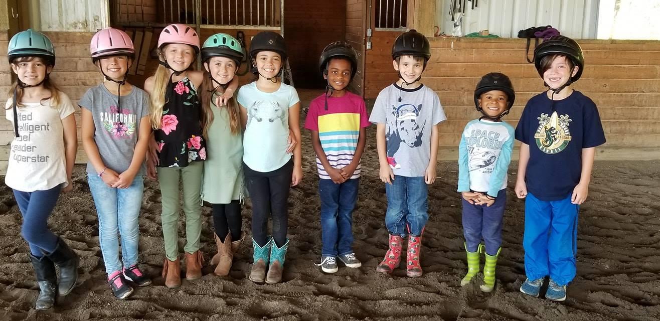 Feather Equestrian Academy Arabian Horse Exchange