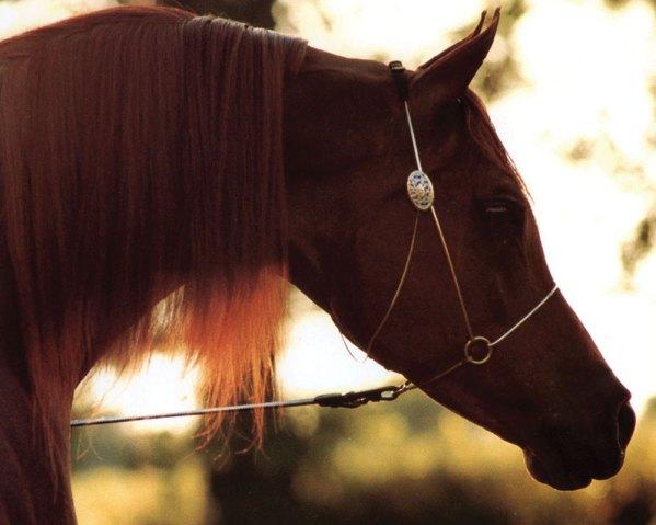 Sport Horse Nationals and the *Ralvon  Elijah Influence