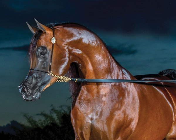 2017 Canadian Nationals Leading Sires