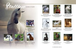 2018 Stallion Directory